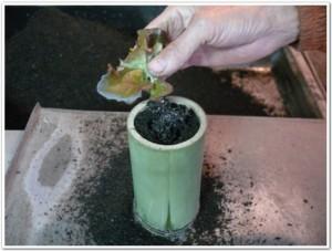 竹鉢でキッチン菜園