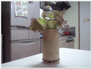 サニーレタスをキッチンで栽培
