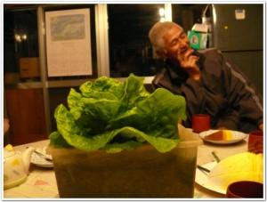 食卓で野菜を栽培しよう