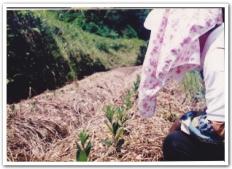 十時花園の母