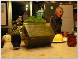 食卓でも栽培できる土