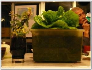 食卓で栽培できる土