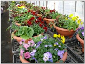 野菜と植物たち