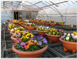 大分園芸花市場に出発