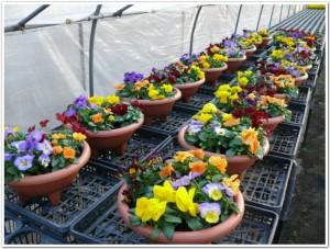 大分の園芸花市場へ行く準備