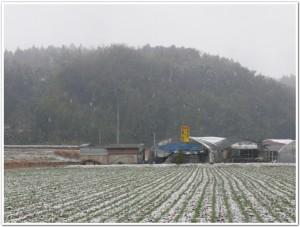 大分県豊後大野市千歳町の雪化粧