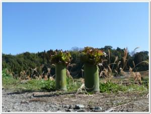竹プランターで室内栽培