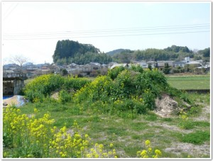 腐葉土づくり2011春
