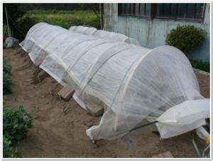 家庭菜園での霜対策の一例