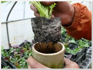 根が生き生きと動く土