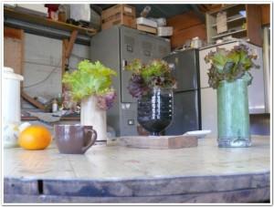 ご家庭の食卓で野菜を栽培