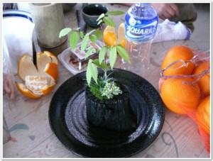 ハゼノキ木炭寄せ植え