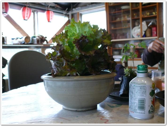 サニーレタスを室内栽培