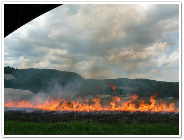 畑に火がつく