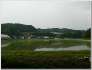 旧千歳村の田んぼ風景