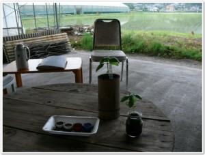 野菜栽培セットとバジル空き瓶