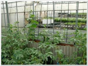 ハウス入り口で野菜菜園ゲートを栽培