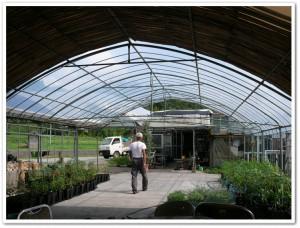 竹屋根の横にビニールの屋根