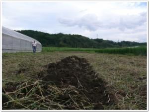 畑に芋を植える