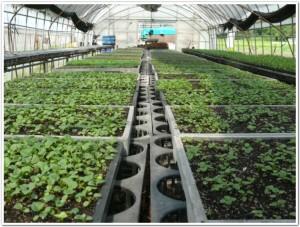 種から野菜や植物たちを発芽