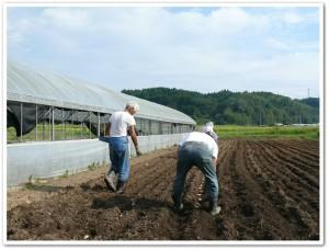 皆で芋を植える
