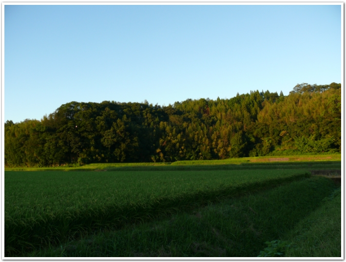 秋の夕暮れと自然