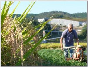 千歳で芋畑を耕す
