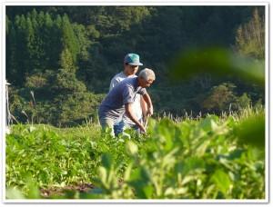 ジャガイモ畑で鍬の使い方を学ぶ