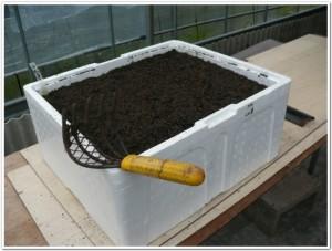 再・再生土で小松菜を栽培