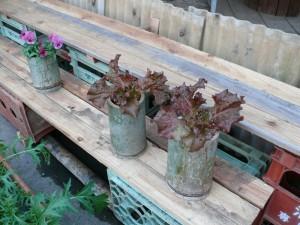 サニーレタスと竹プランター