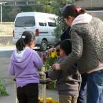 花の摘み取り方を学ぶ