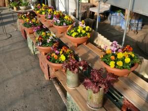 十時花園の花々