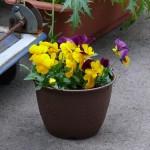 プランターに花を寄せる