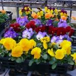 花をきれいに並べる