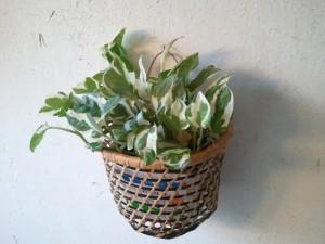 室内の壁プランターで観葉植物