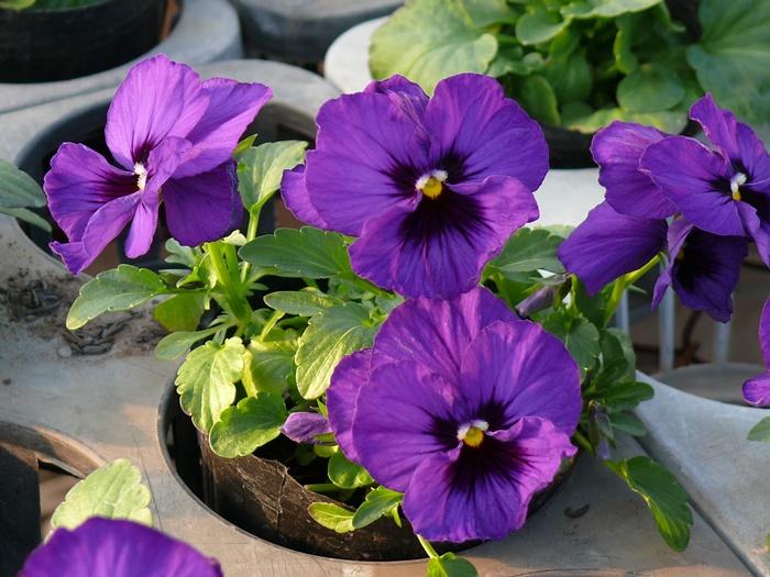 花びら・つぼみ・葉のバランス
