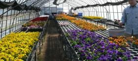 spring-color