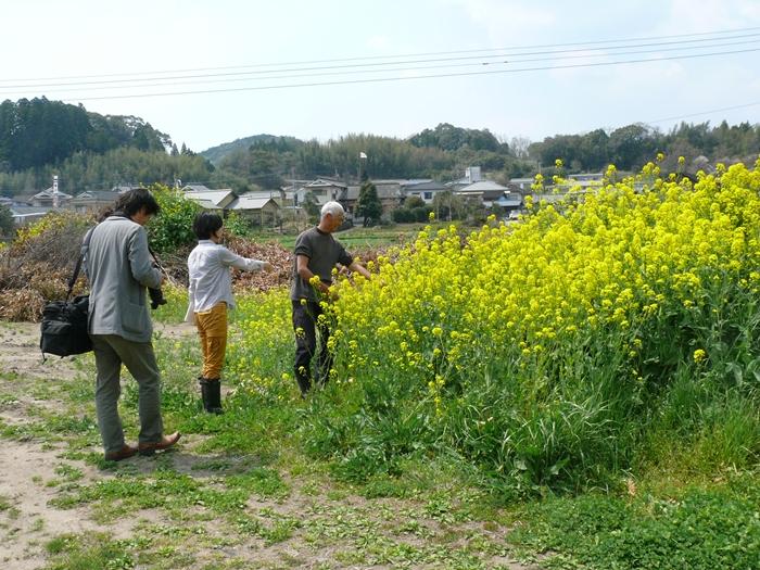 菜の花と腐葉土
