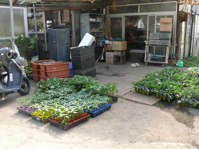 野菜苗の出荷準備