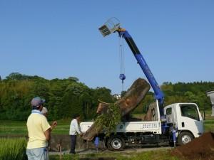 大木を移動させる