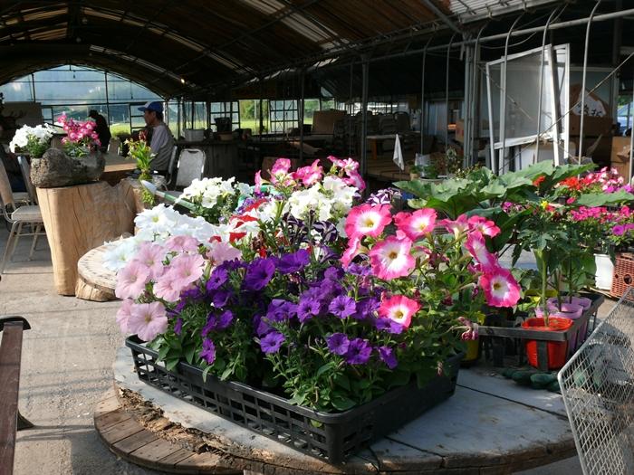 旅立つ花々や野菜の苗立ち