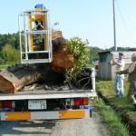 トラックの荷台に大木が