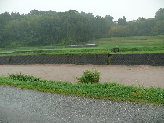 降り続く雨と茜川の水位