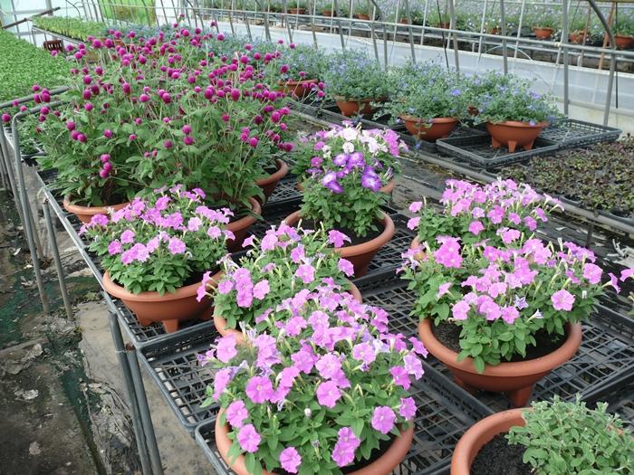 土の力を吸収するプランター栽培たち