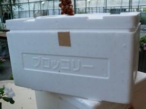 発泡スチロールの容器をプランターに使う