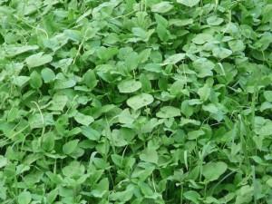 草に覆われた腐葉土