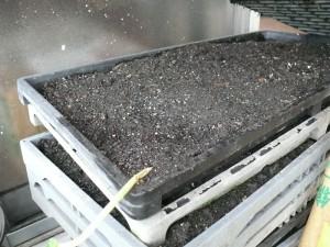 伸びる茎のスタート地点