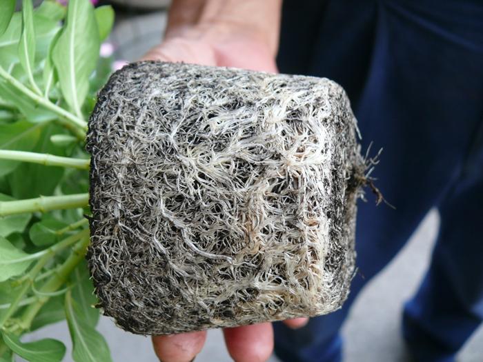 成長する根が根や黒土を食べる