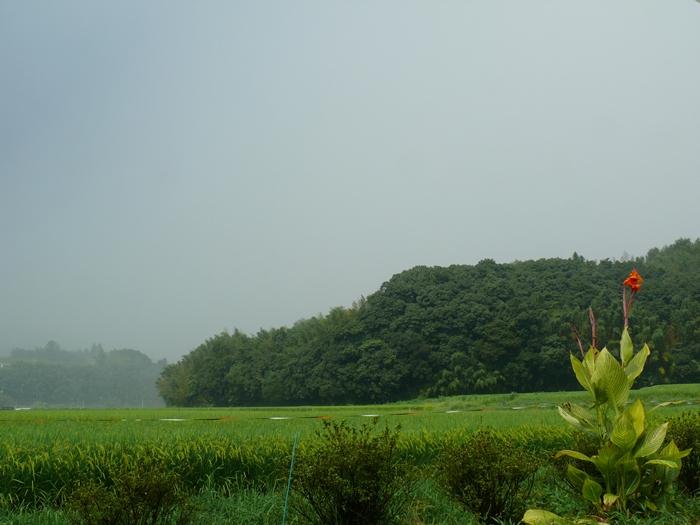 雨との境目