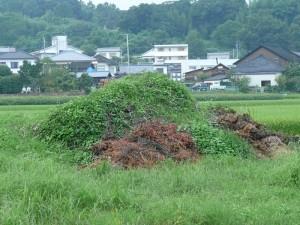 緑に包まれる腐葉土